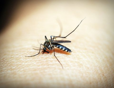 A mosquito bite can cause some an allergic reaction