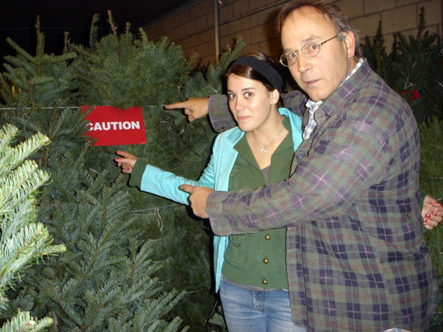 WARNING: Christmas Tree Mold Is Real! 4 Ways To Prevent Christmas ...
