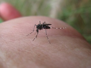 Mosquito Control All The Best Ways To Repel Mosquitoes In