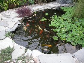 pond-fish-by-Super-Fantastic.jpg