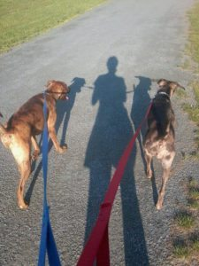 walking-with-dogs